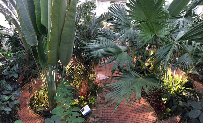 Edvard Anderson Conservatory