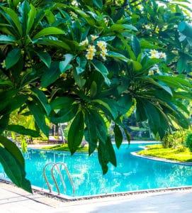 Plumeria by a hotel pool