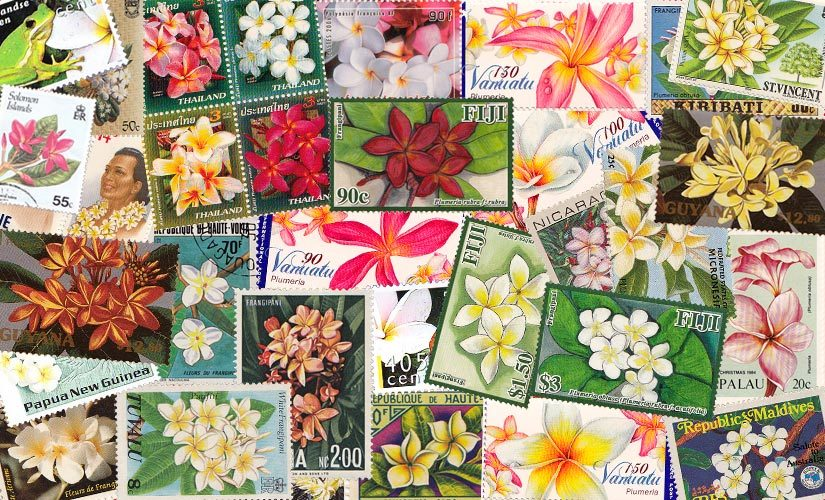 Plumeria stamps collection