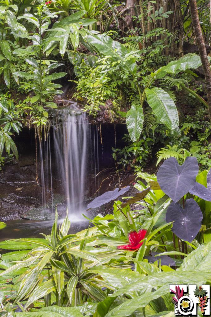 Small waterfall in Hotel Bougainvillea garden