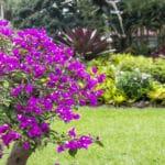 Best Tropical Garden Hotels - Hotel Bougainvillea