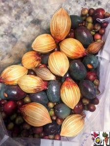 tropical palm seeds