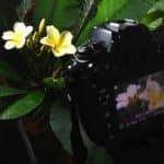 plant time lapse