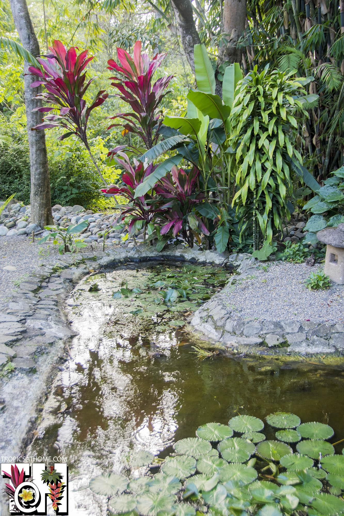 Lankester Botanical Garden Costa Rica Tropics Home