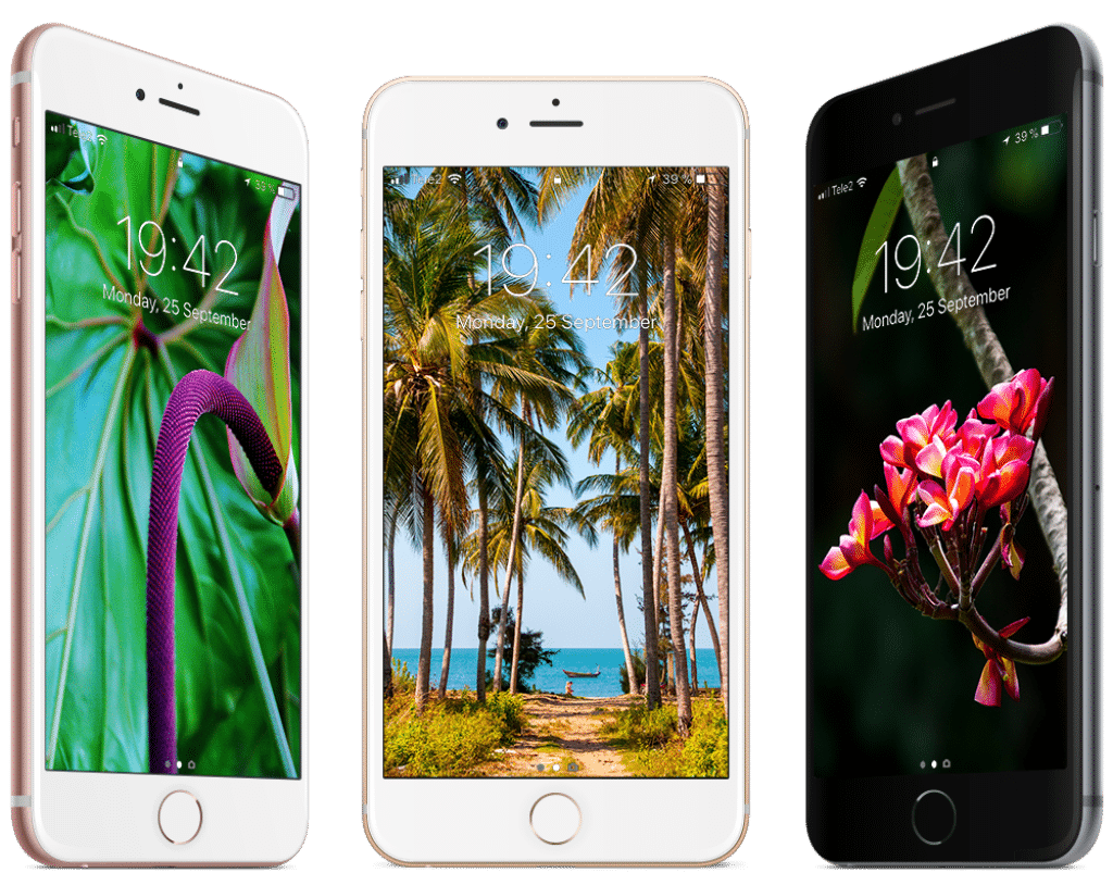 Free tropical wallpapers for iPhone