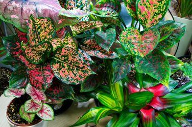 Tropical plants indoors