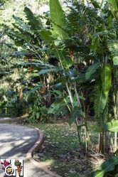 Heliconia path