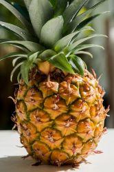 Ripe home grown Swedish pineapple