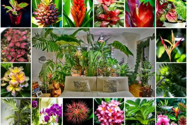 my tropical urban jungleu2026 counted and classified
